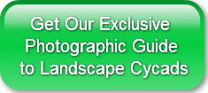 Get Our Exclusive  Photographic Guidet