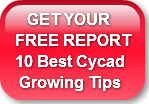    GET YOUR FREE REPORT 10 Best Cycad Gr